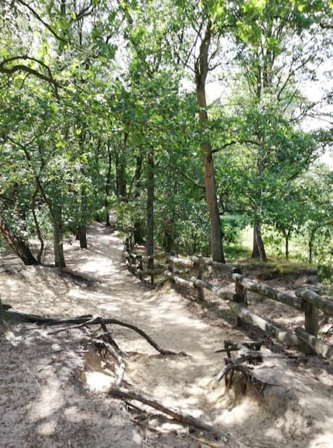 bospad in het lutterzand